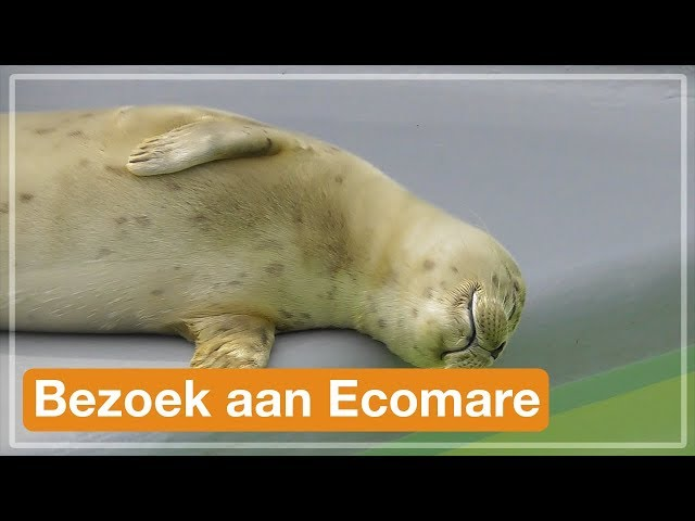 Bezoek aan Ecomare | Texel 2017 (#5)