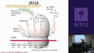 Natural Science II: Genomes And Diversity - Splicing, Translation&Recombinant DNA