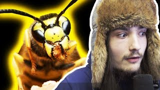 WE GOT SWARMED BY BEES by xCodeh