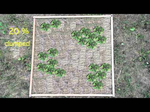 Estimation of plant cover in quadrats