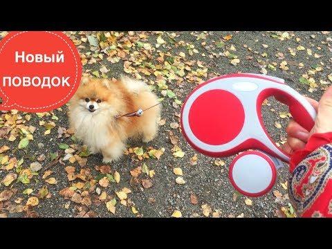 Купить рулетку поводок для собак в интернет магазине недорого