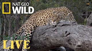 Safari Live - Day 172 | Nat Geo WILD by Nat Geo WILD