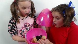 "Surprise Eggs Baby Chicks ""Annabelle Victoria Rex Toy Freaks Egg"" Giant Surprise Shark Eggs Attack Annabelle ""Starring Rex..."