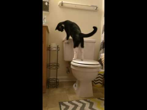 Cat Repeatedly Flushes Toilet