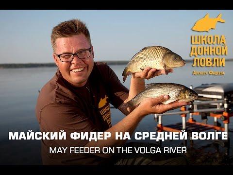 рыбалка на сазана на средней волге