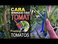 Bagaimana Cara Memangkas Tanaman Tomat???? //  Pruning Tomatos # 50