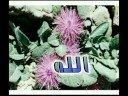 عبدالحليم حافظ ياخالق الزهرة