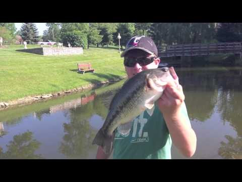 Pond bass and catfishing for Bass fishing in ponds
