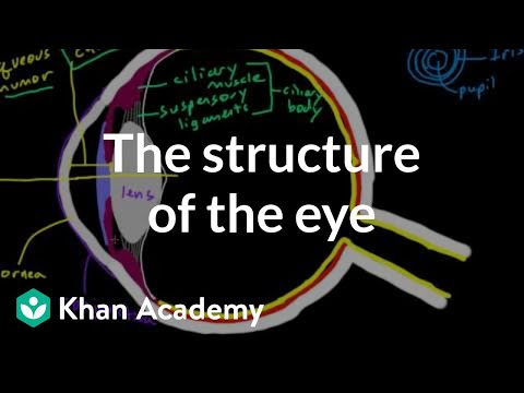 The Structure Of The Eye Video Khan Academy