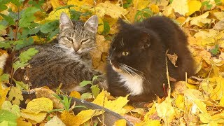 Cats sleeps on yellow leaves