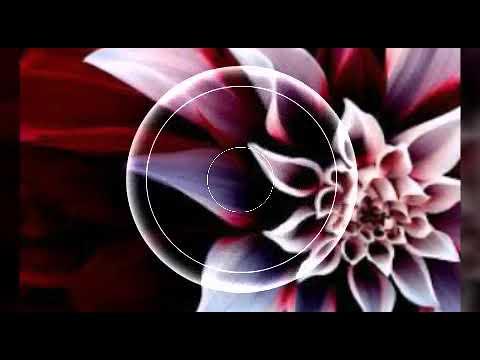 Imagenes para enamorar - Rosas para enamorar