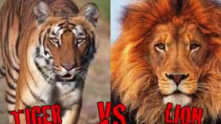 10 CRAZIEST Animal Fights Caught On Camera by Animalion