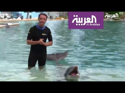 العرب اليوم - بالفيديو: تجربة السباحة مع الدلافين في