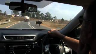 Kokstad South Africa  City pictures : K'Mali on it's way to Kokstad part 1