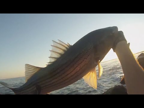 Surf Fishing Rhode Island for Stripers – Sept 2014