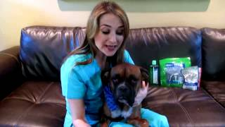 Learn About Pet Dental Care With Dr. Ruth MacPete