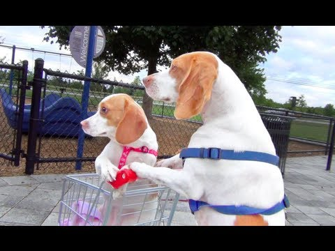 Dog Takes Puppy on Journey in Shopping Cart%3A Cute Dog Maymo and Puppy Penny