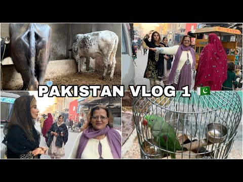 I'M IN PAKISTAN 🇵🇰 | PK VLOG 1 | All Things Anisa