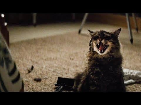 Вышел трейлер фильма Кладбище домашних животных