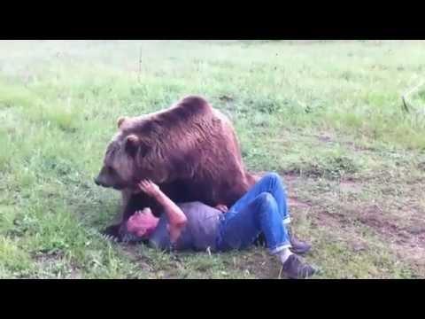 un orso che gioca facendo le capriole!