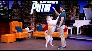 Download Video Anjing Akita Yang Setia | HITAM PUTIH (15/10/18) Part 1 MP3 3GP MP4
