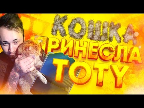 КОШКА ВЫТАЩИЛА TOTY!