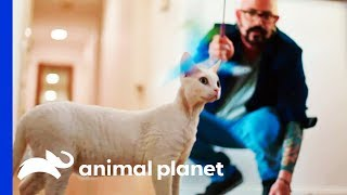 Family Seeks Help With Their Cat's Random Attacks | My Cat From Hell by Animal Planet