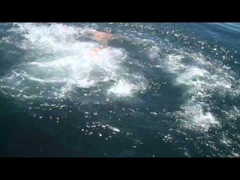 「真下を行く世界で2番目に大きい魚「ウバザメ」さんに向かってダイブする外国人。」のイメージ