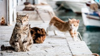 You Could Get Paid to Live on a Greek Island and Cuddle Cats All Day by Did You Know Animals?