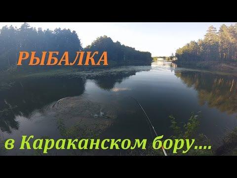 рыбалка на бору видео