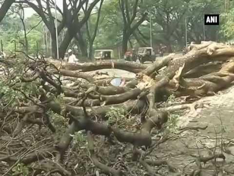 العرب اليوم - شاهد: الرياح القوية والأمطار الغزيرة تقتلع الأشجار في الهند