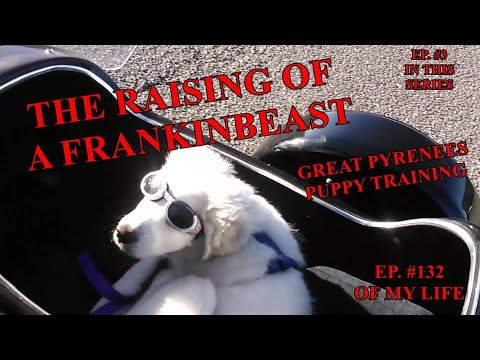 The Frank Files  EPISODE #3  IN MY PUPPY TRAINING SERIES  THE RAISING OF A FRANKINBEAST #FrankSmiles