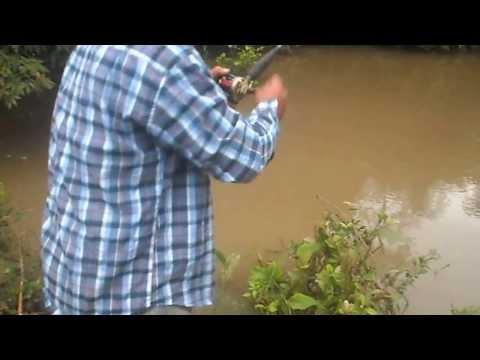 Pescaria de Cachara rio agua fria!
