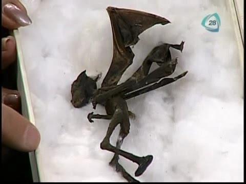 misteriosa creatura alata rinvenuta in messico