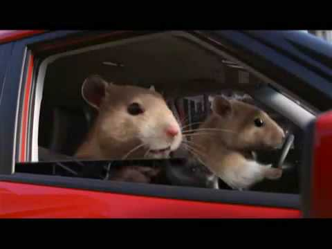 Party Rock Anthem Kia Soul Hamster