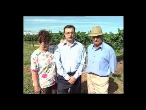 1997 Ethnic Business Awards Finalist – Manufacturing Category – Sarantos Moulardellis – Kingston Estate Wines