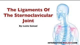 077 The Ligaments Of The Sternoclavicular Joint
