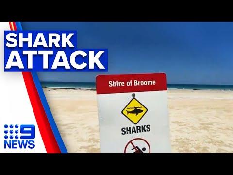 Man killed in shark attack near Broome | 9 News Australia