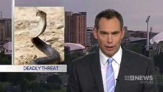Video Snake Warning | 9 News Adelaide MP3, 3GP, MP4, WEBM, AVI, FLV Juli 2018