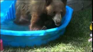Monrovia (CA) United States  city images : Bear in our backyard! Monrovia California