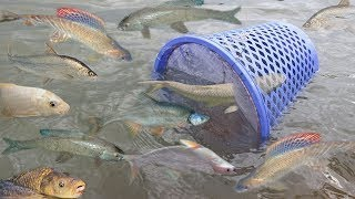 Thanks you for your watching Smart Girl Make Fish Trap Using Basket To Catch A Lot of Fish In Cambodia =================================================== ...