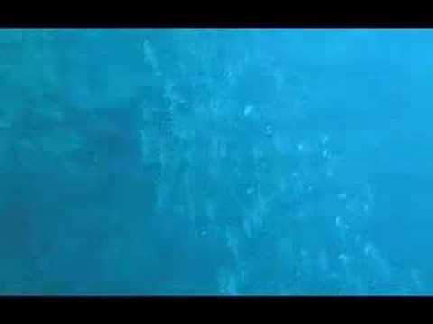 Buceo en Manado Sulawesi Indonesia