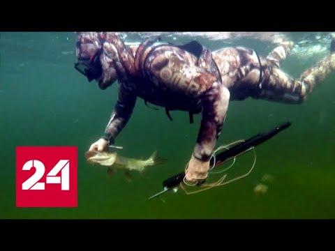 Видео подводной охоты на щуку снятое Владимиром Путиным в Туве - DomaVideo.Ru