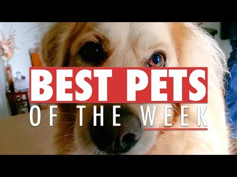 Best Pets of the Week Video Compilation | September 2017