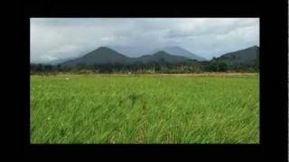 Rice Field Time Lapse