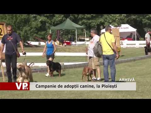 Campanie de adopții canine, la Ploiești