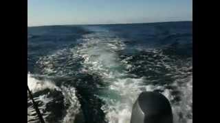 Rottnest Island Australia  city images : Killer whales Rottnest Western Australia