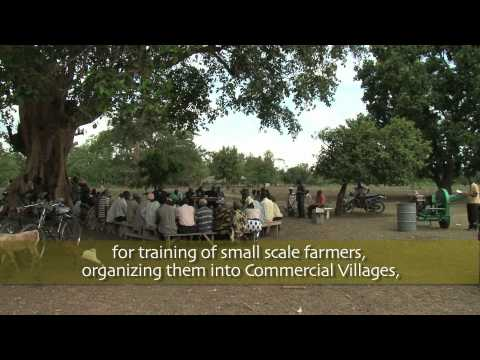 Cassava Revolution in Africa: Part 1