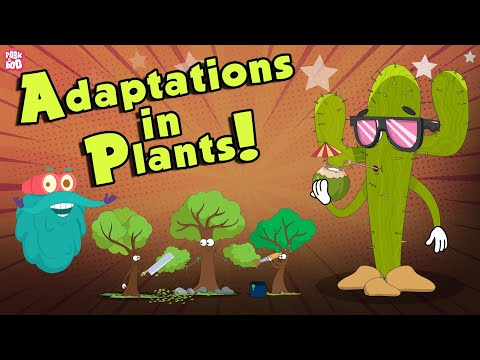 Adaptations In Plants | What Is ADAPTATION? | The Dr Binocs Show | Peekaboo Kidz