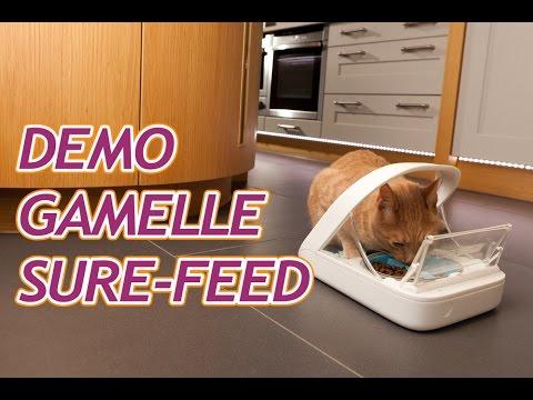 Démonstration SureFeed - Gamelle électronique pour chat
